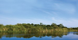 Image of the everglades