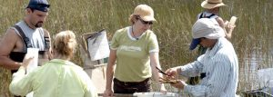 Evelyn Gaiser conducts research on how water, climate and people impact the Everglades