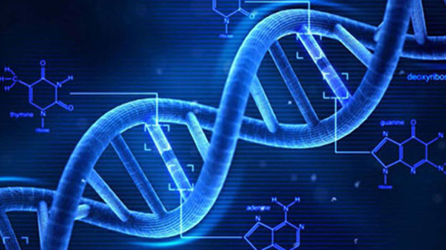 Image of DNA core