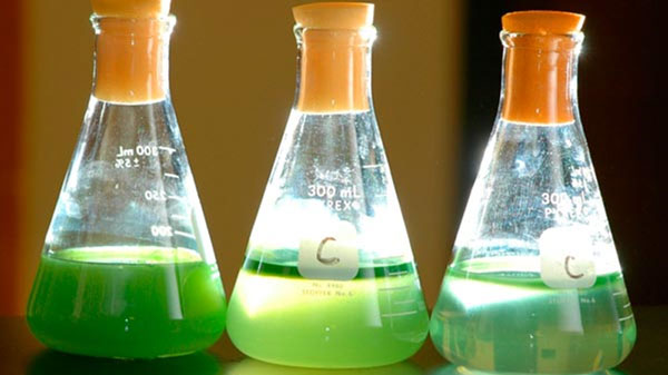 Scientific glass filled half way with Algae