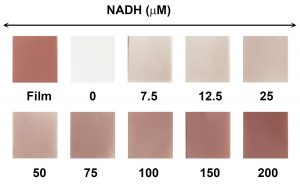 IP 1428-colorimetric detection of NADH on AuNP-coated mixed cellulose ester filter paper